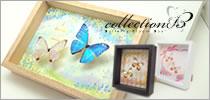 蝶とイラストのインテリアアート「コレクションB」