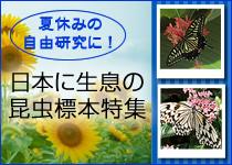 自由研究日本の蝶